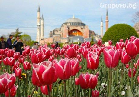 Посетете фестивалa на лалето в Истанбул! Транспорт + 2 нощувки и закуски и богата туристическа програма от Еко Тур Къмпани