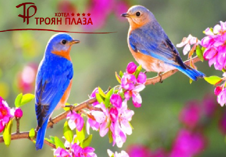 Майски празници в Троян! 2 или 3 нощувки със закуски и вечери, едната празнична + сауна и контрастен басейн от хотел Троян Плаза****